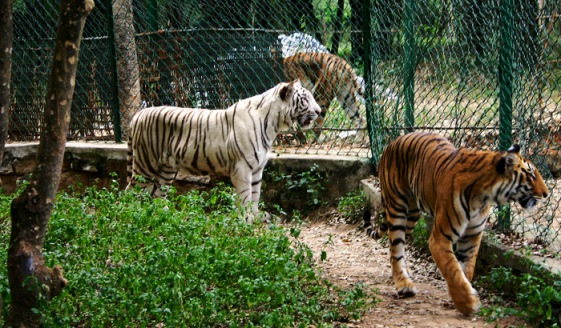 Bannerghatta-National-Park-Prateek-Rungta-Flickr-Creative-commons